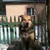 пропала собака, ДЖЕК, 12 лет, метис, мальчик