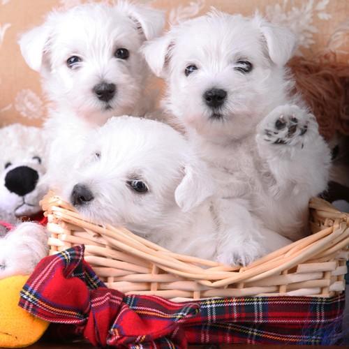 Дать бесплатное oбъявлeниe в тюмени в рубрику собаки и щенки