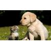 Зоопсихолог. Различные проблемы поведения собак.