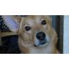 Пропала собака Джек ул.Болотниковская, Москва