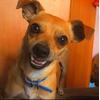 пропала собака породы пинчер