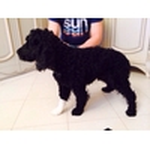 Нашли собаку черную