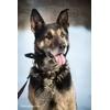Рекс – решительный и храбрый пес с независимым характером