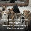 """Приют для бездомных животных """"Волчок"""" (г.Челябинск)"""