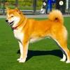 Собаки - Породы - Голден ретривер (золотистый ретривер)