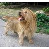 Какая самая маленькая и самая крупная порода собак существуют в мире?