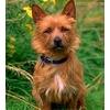 Какой должна быть собака для караульной службы?