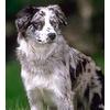 Если взять взрослую собаку, достоинства и недостатки такого выбора?