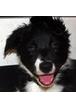 У моей собаки на локтях образовались грубые мозоли. Можно ли их вылечить?