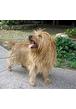 Какая лежанка для собаки лучше: ортопедическая или обычная?