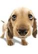 Почему у собак нос всегда влажный?