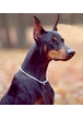 Собака сильно возбуждается и писается, когда приходит хозяин, как с этим бороться?