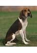 Почему сходив в туалет, собаки разбрасывают землю?