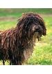 Что такое кондиция у собак?