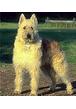 Сколько времени необходимо для выгула взрослой собаки?