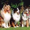 Какие могут быть профессии у собак?