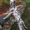 Как приучить щенка к чистоплотности?
