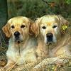 Почему собаки постоянно все обнюхивают?