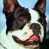 Если взять молодую собаку, достоинства и недостатки такого выбора?