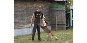Бельгийская овчарка тервюрен