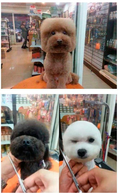 """В Тайване собак стригут под""""шар"""" и """"куб"""""""