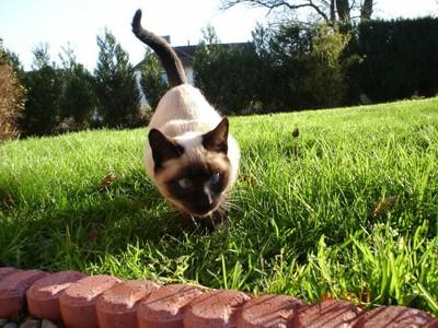 Кот, живущий на два дома