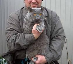 Хочешь снизить налог – возьми кошку из приюта
