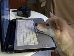 Собаки способны «читать» эмоции на человеческом лице