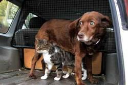 Кошка – поводырь слепого пса
