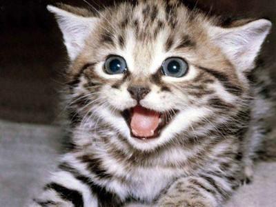 Переводчик с кошачьего языка уже в продаже