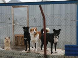 В Германии закон защищает домашних животных