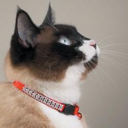 «Умный» ошейник для котов