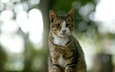 Учёным-генетикам помогают…  кошки