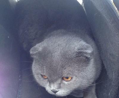 Как в Петрозаводске кота от смерти спасли