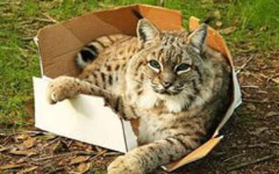 Почему кошки прячутся в коробки