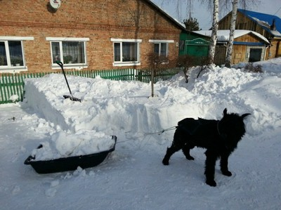 Работящий пёс