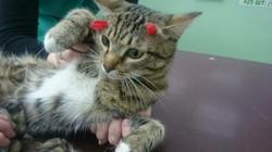Сёма - кот, который выжил после двух выстрелов в голову