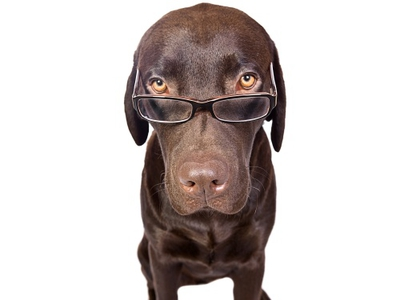 Человеческая речь понятна собакам