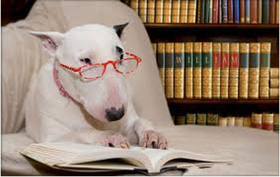 Создание собаки-интеллектуала