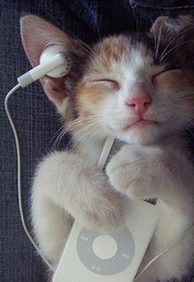 Написана музыка для кошек