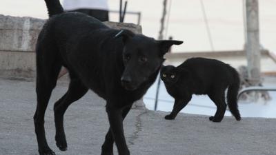 Финляндия: кошка и собака – лучшие друзья