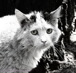Хотите приобрести настоящего друга? Не пропустите выставку бездомных кошек!