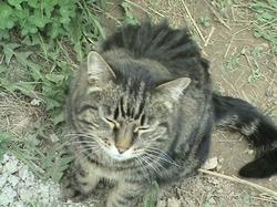 Обнинск: кошка спасла младенца