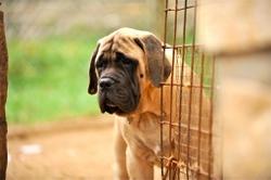 Что такое «щенячий взгляд»