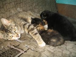 У мамы-кошки сынок-щенок