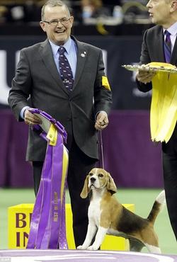 Собака Америки - 2015