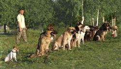 Обязательная дрессировка собак в России