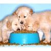 Корма для собак (основные, подкормки, витамины)