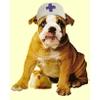 Ветеринарные аптеки