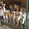 Приюты для собак